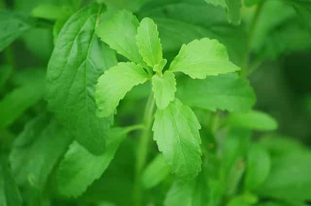 comprar stevia